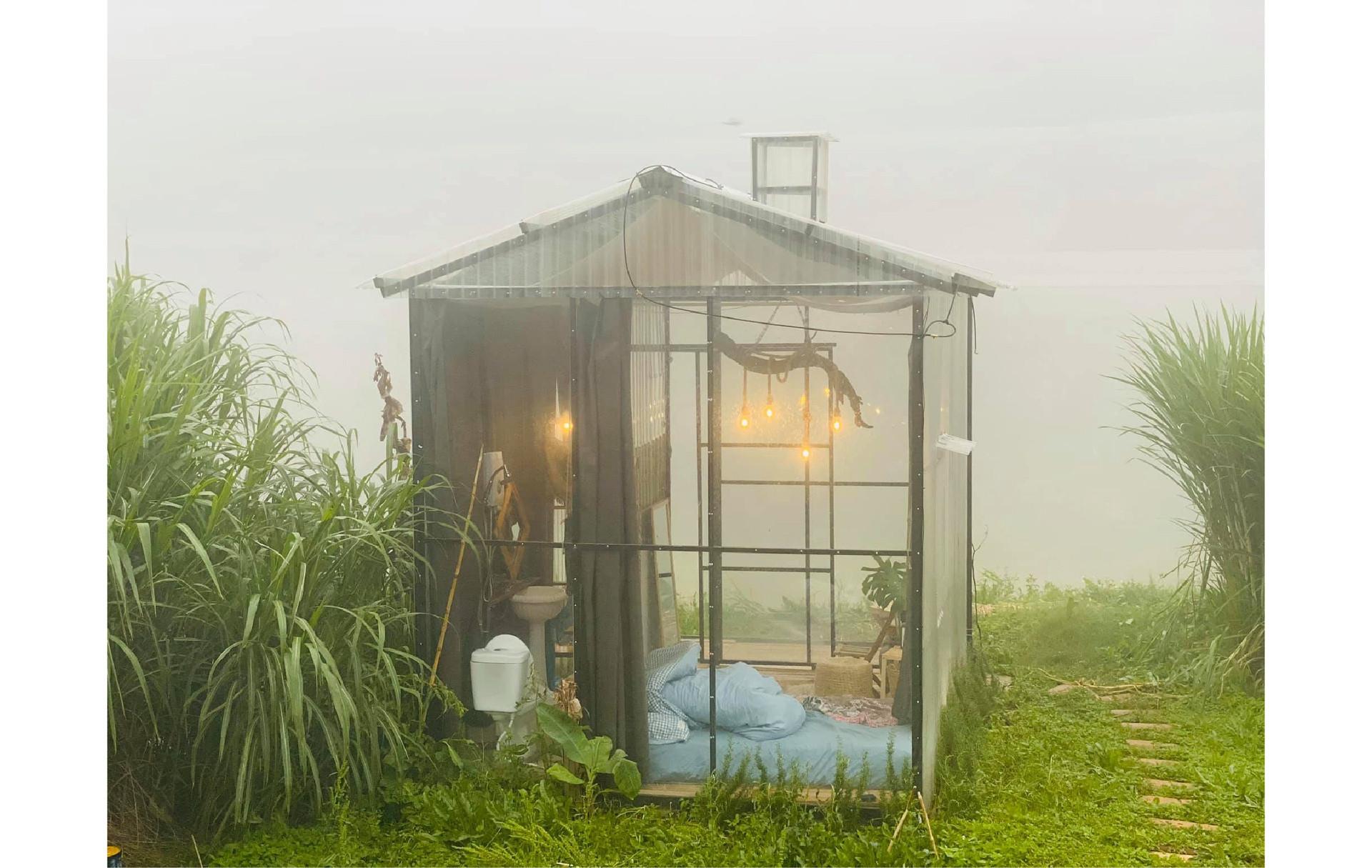 Chủ homestay Đà Lạt trồng rau, nuôi gà trong thời gian đóng cửa - 9