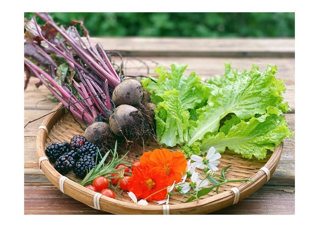 Chủ homestay Đà Lạt trồng rau, nuôi gà trong thời gian đóng cửa - 4