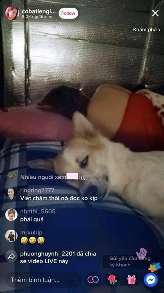 Chú chó miền Tây thành hiện tượng livestream, diễn nét ngủ hút 8K người xem-1