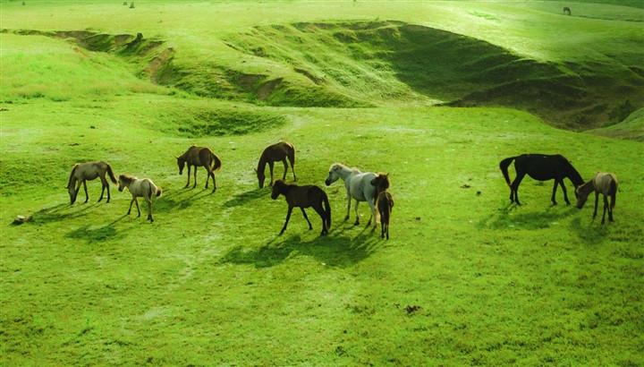 Gần Hà Nội có một thảo nguyên đổi cảnh theo mùa, xách ba lô đi ngay khi hết dịch - 6