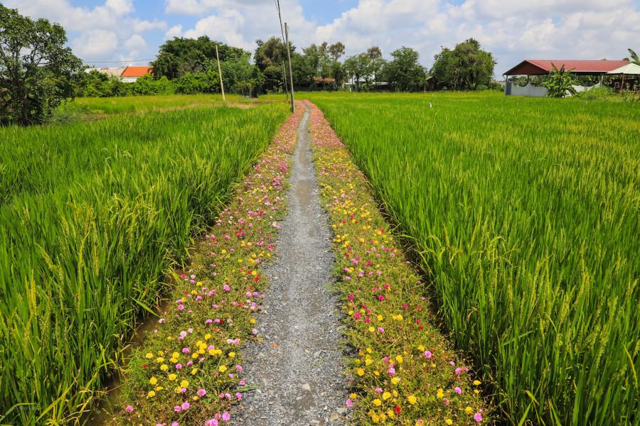 Con đường hoa mười giờ ở vùng ngoại ô Sài Gòn - 3