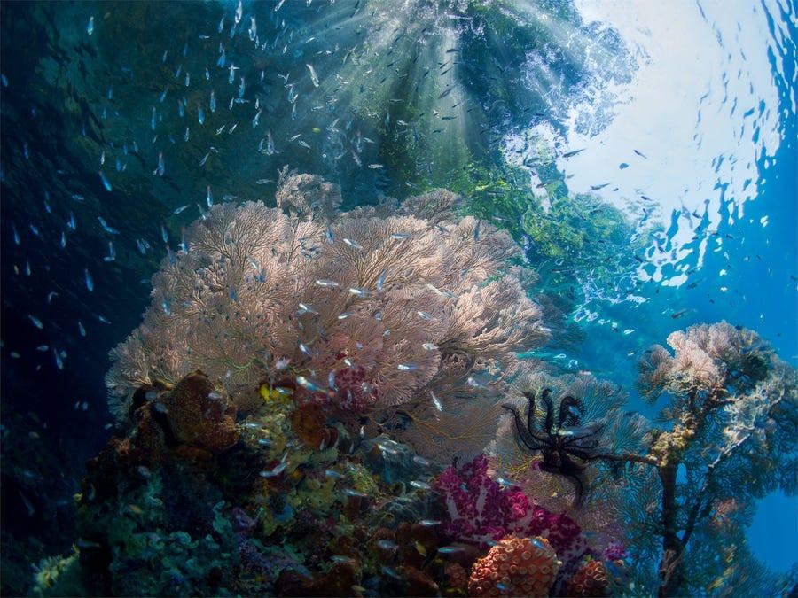 Vẻ đẹp dưới đáy đại dương chưa bao giờ khiến chúng ta hết kinh ngạc - 13