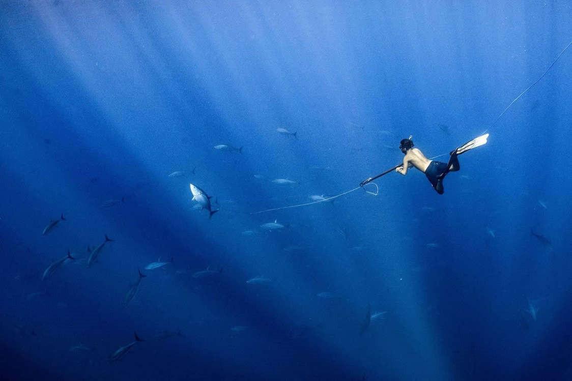 Vẻ đẹp dưới đáy đại dương chưa bao giờ khiến chúng ta hết kinh ngạc - 3