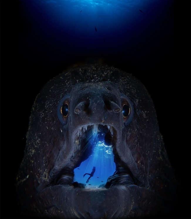 Vẻ đẹp dưới đáy đại dương chưa bao giờ khiến chúng ta hết kinh ngạc - 5