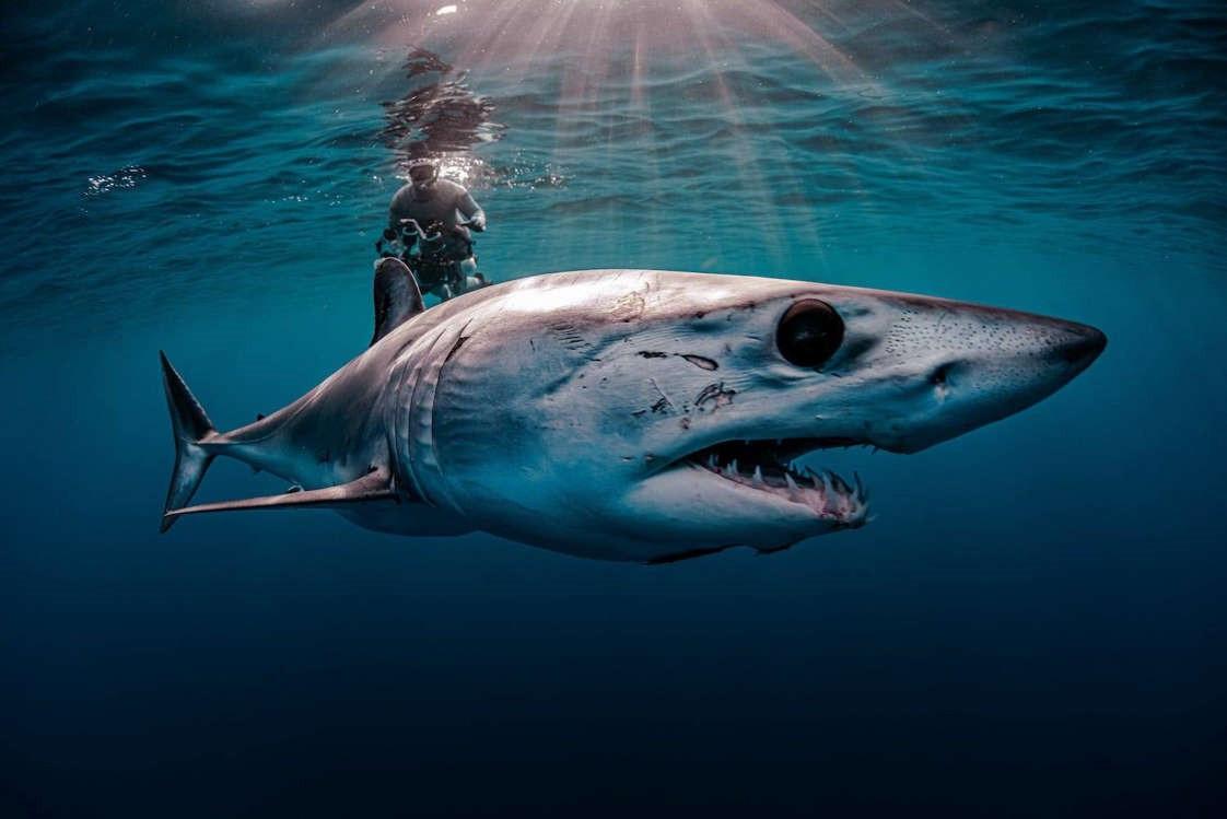 Vẻ đẹp dưới đáy đại dương chưa bao giờ khiến chúng ta hết kinh ngạc - 8