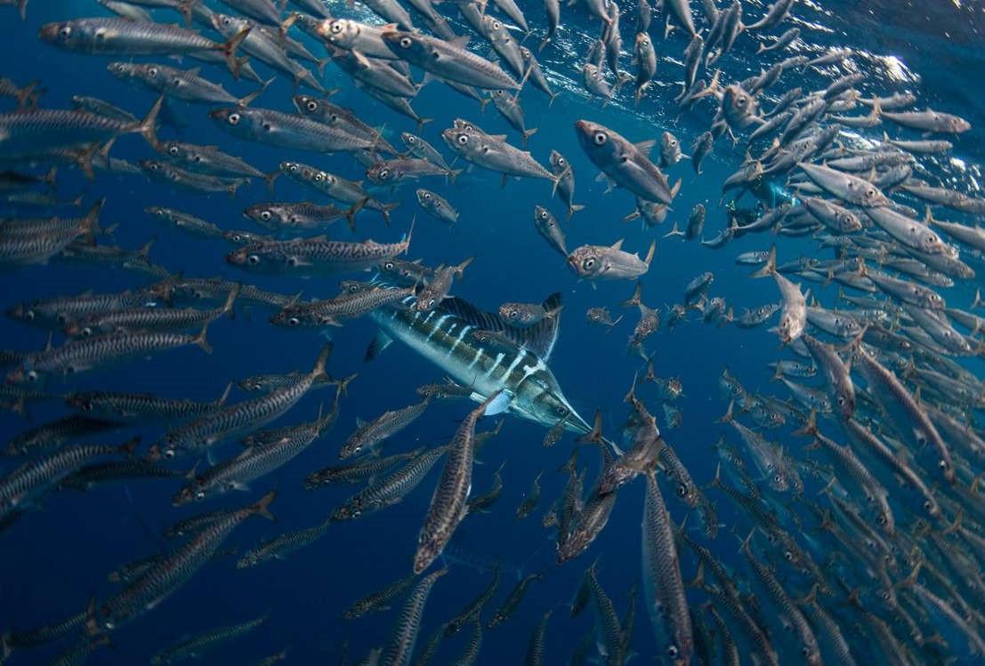 Vẻ đẹp dưới đáy đại dương chưa bao giờ khiến chúng ta hết kinh ngạc - 2