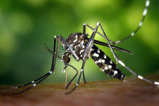 Muỗi hút máu bợm nhậu thì có bị say không? - Ảnh 1.