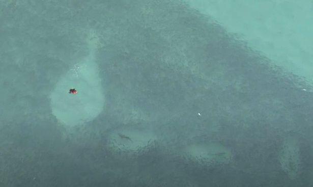 Clip: Thót tim đàn cá mập bơi xung quanh người lướt sóng rình mồi mà không ai hay biết - Ảnh 3.