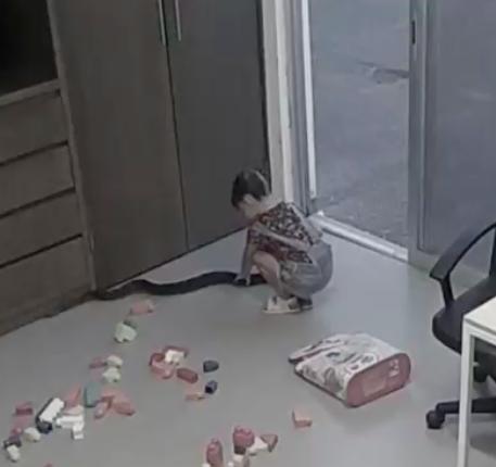 Clip: Rắn khủng bò vào nhà, bé gái vuốt ve âu yếm như thú cưng-1
