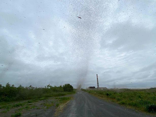 Clip: Hàng triệu con muỗi tạo thành lốc xoáy ở Nga nhìn sởn da gà-1