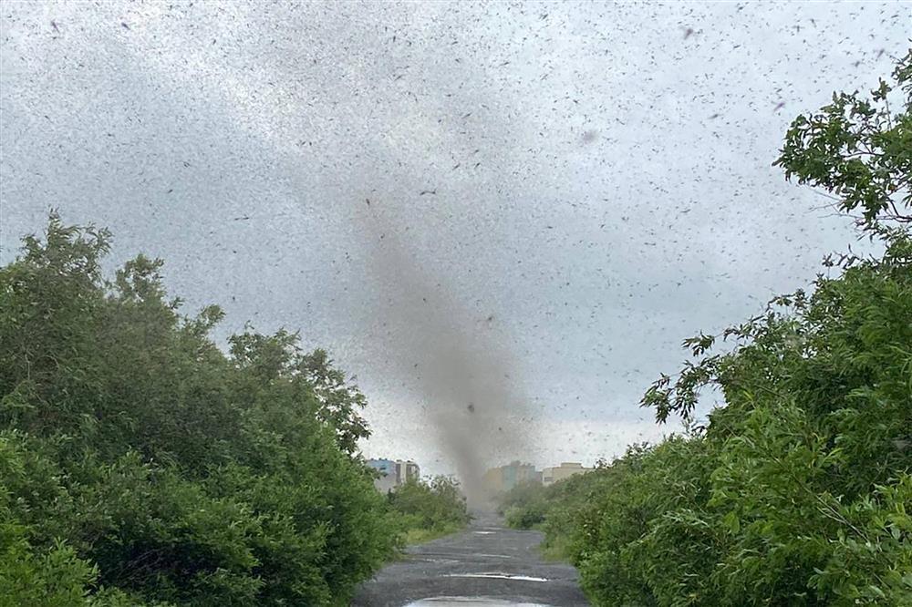 Clip: Hàng triệu con muỗi tạo thành lốc xoáy ở Nga nhìn sởn da gà-2