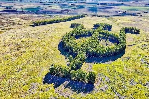 Khu vườn bạch đàn kết thành hình thù độc lạ nổi tiếng nhờ Google Earth - Ảnh 1.