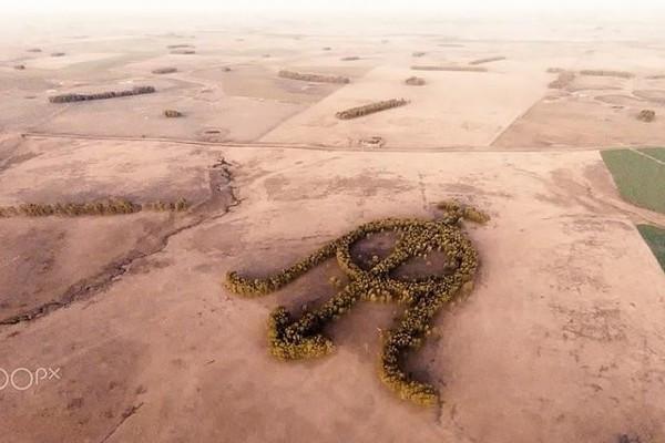 Khu vườn bạch đàn kết thành hình thù độc lạ nổi tiếng nhờ Google Earth - Ảnh 2.