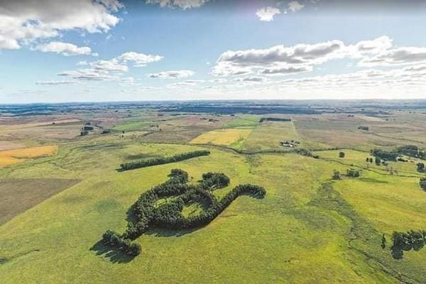 Khu vườn bạch đàn kết thành hình thù độc lạ nổi tiếng nhờ Google Earth - Ảnh 3.