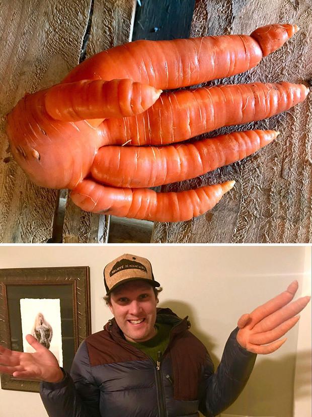 Tuyển tập 15 rau củ quả có ngoại hình phát khiếp, mang về không dám nấu ăn vì sợ chúng nó... đánh cho - Ảnh 13.