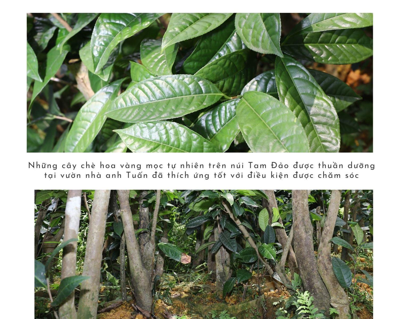 """Thuần dưỡng """"báu vật"""" của rừng - 2"""