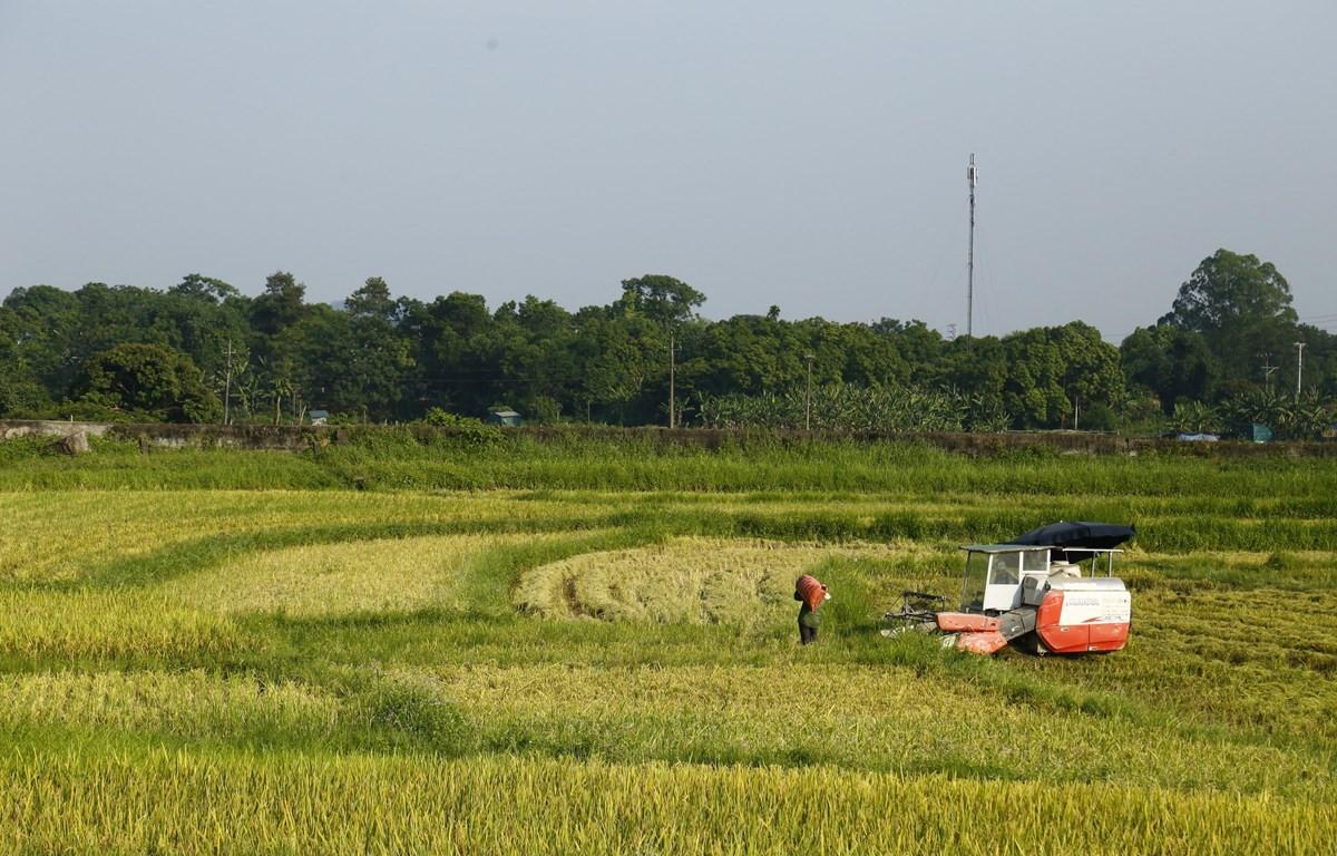 Người dân thu hoạch lúa trên cánh đồng xã Tràng Đà, Tuyên Quang. (Ảnh: Nam Sương/TTXVN)