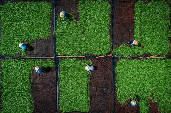 Ngắm bộ ảnh 'Việt Nam nhìn từ trên cao' đạt bằng Danh dự cuộc thi ảnh thường niên FIAP - 3