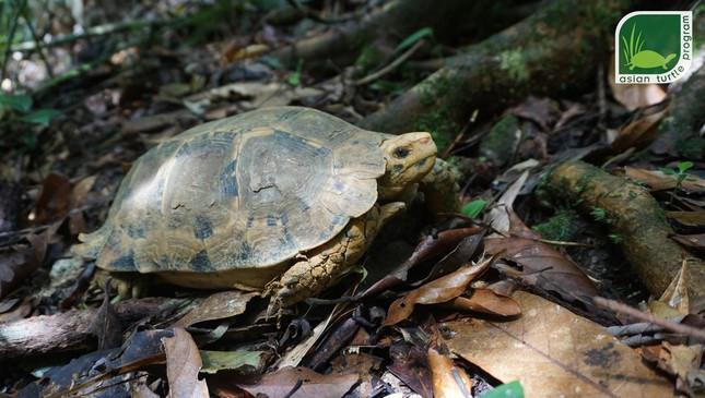 Cảnh báo nuôi rùa làm cảnh rước bệnh vào thân - Ảnh 1.