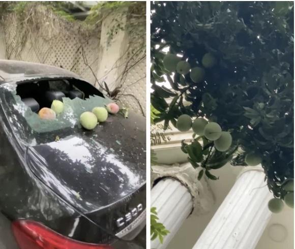 Thêm anh bán trái cây có nỗi buồn giống chị Phượng Chanel: Sầu riêng rụng làm kính xe ô tô vỡ nát-1