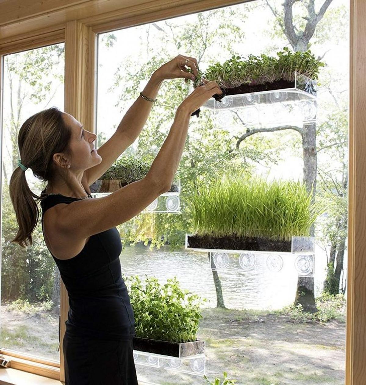 Bạn có thể tạo ra một khu vườn nhỏ trong nhà trên chính kệ cửa sổ.