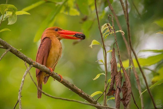 Chim hút mật no nê rồi ngả lưng ngủ trên cánh hoa, khoảnh khắc chỉ có một lần trong đời - Ảnh 7.