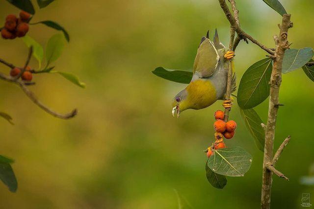 Chim hút mật no nê rồi ngả lưng ngủ trên cánh hoa, khoảnh khắc chỉ có một lần trong đời - Ảnh 9.