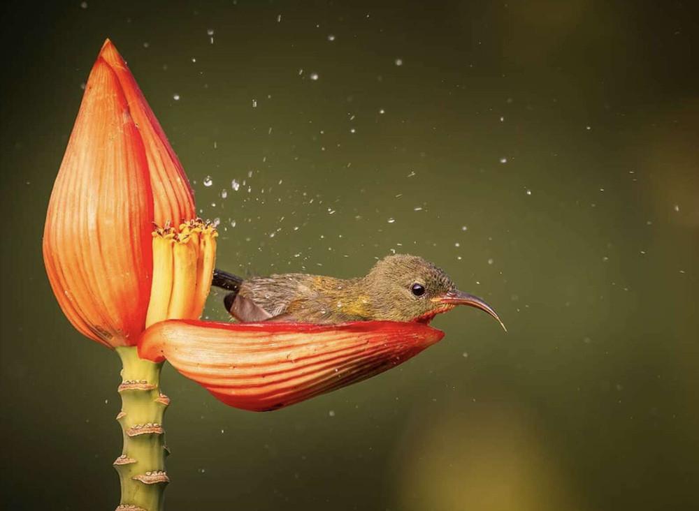 Chim hút mật no nê rồi ngả lưng ngủ trên cánh hoa, khoảnh khắc chỉ có một lần trong đời - Ảnh 1.