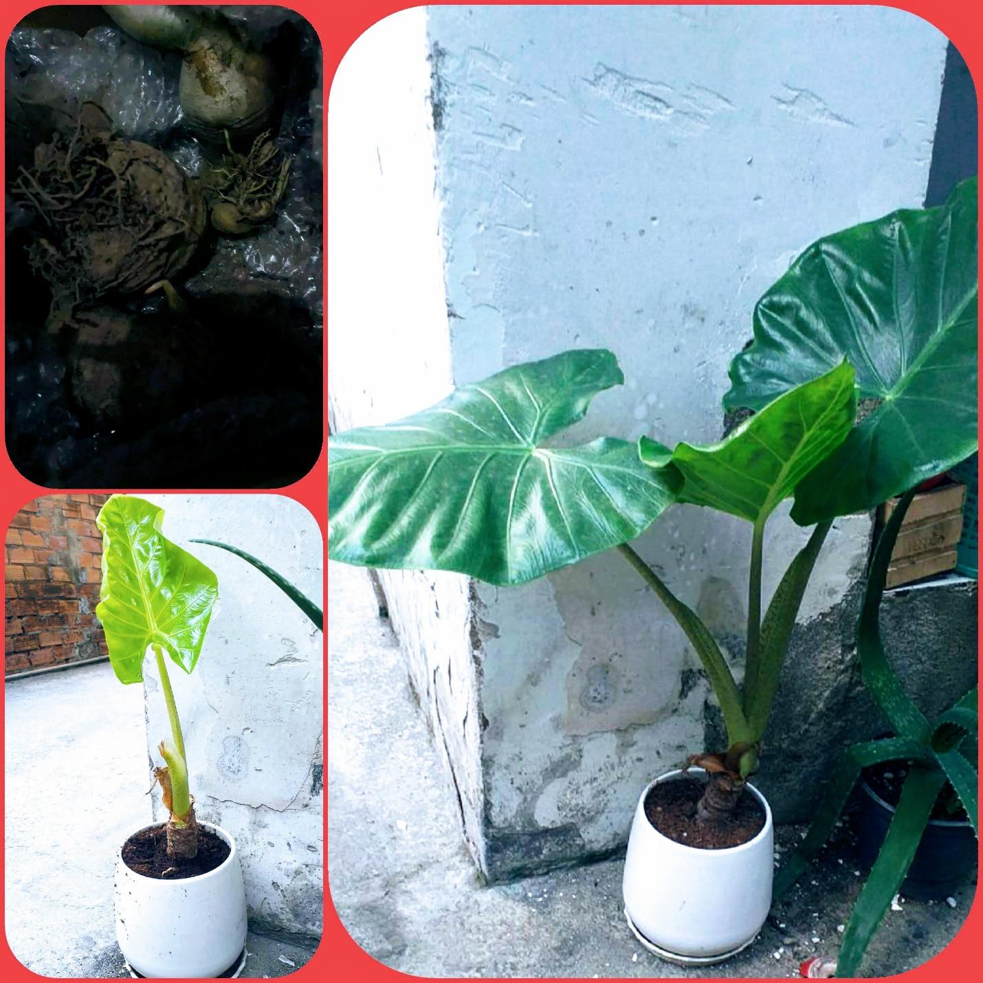 Sài Gòn trồng cây, hẹn gặp nhau khi hoa nở - 2