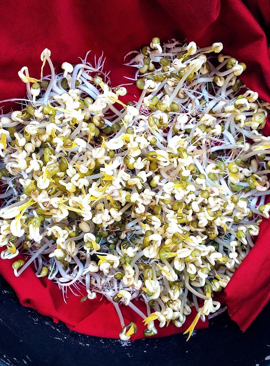 Sài Gòn trồng cây, hẹn gặp nhau khi hoa nở - 4