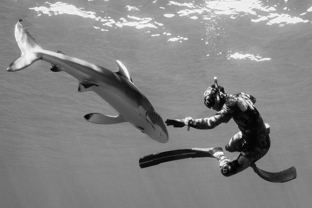 Chùm ảnh: Rùng mình cảnh thợ lặn chơi đùa, âu yếm cá mập hổ khổng lồ  - Ảnh 6.