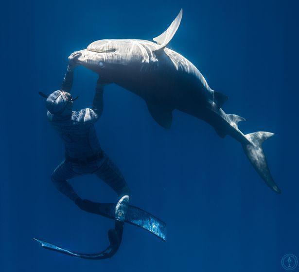 Chùm ảnh: Rùng mình cảnh thợ lặn chơi đùa, âu yếm cá mập hổ khổng lồ  - Ảnh 7.