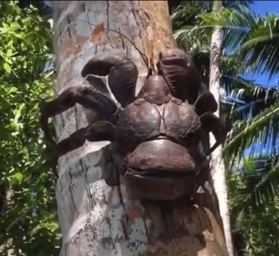Quái vật trên cây dừa nhiều người sợ hãi lại là đặc sản hiếm có-1