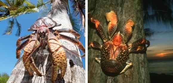 Quái vật trên cây dừa nhiều người sợ hãi lại là đặc sản hiếm có-2