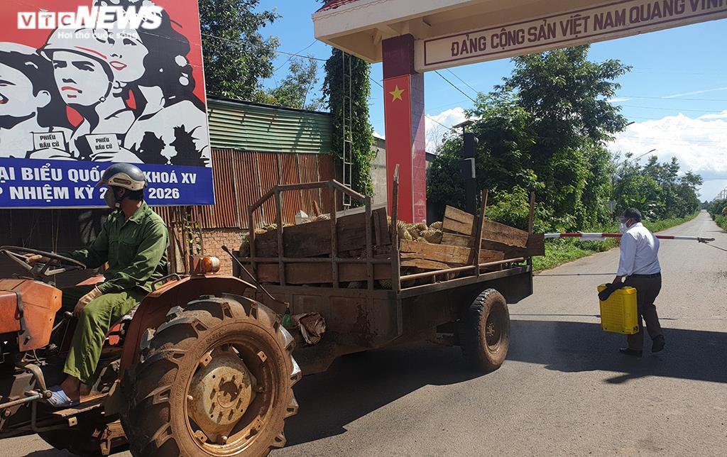 Đắk Lắk: Nông sản rớt giá vì COVID-19, dân khóc ròng - 1