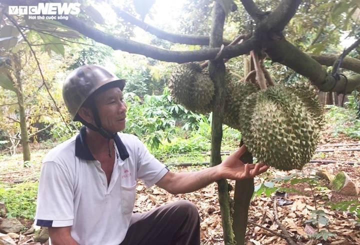 Đắk Lắk: Nông sản rớt giá vì COVID-19, dân khóc ròng - 2