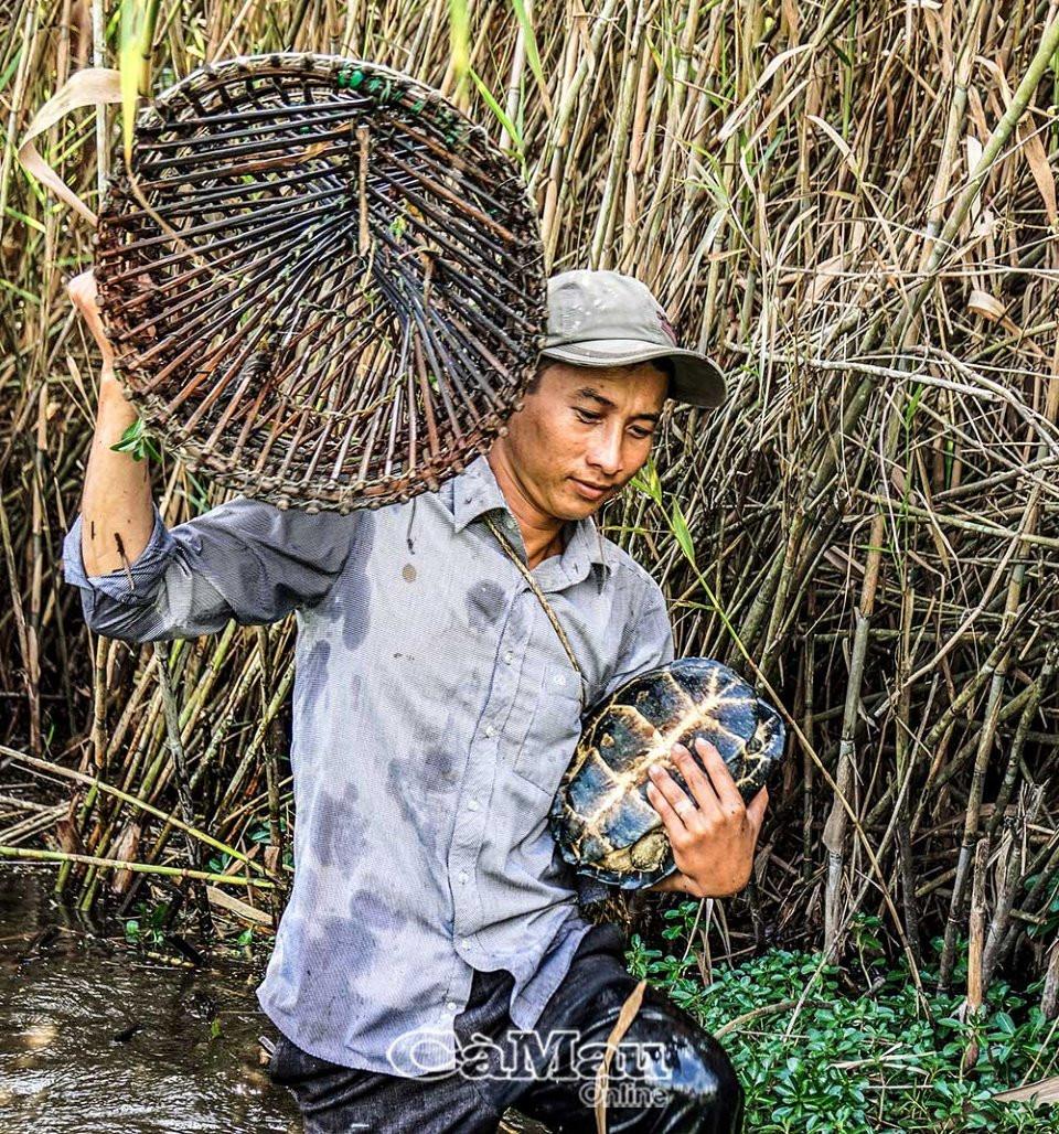 U Minh Hạ vào mùa đặt lọp bắt cá, rùa, rắn... - 1