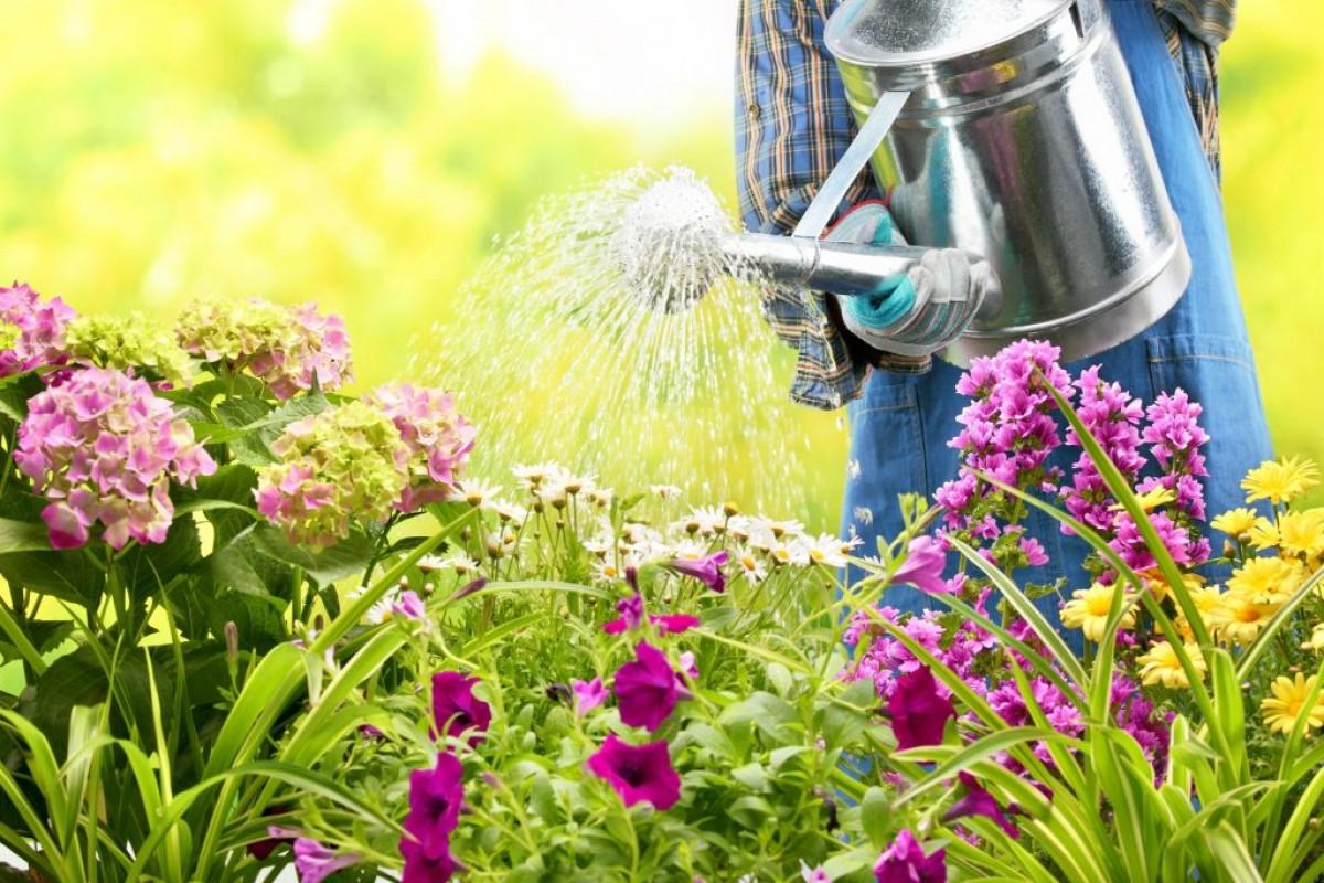 Hãy thử sử dụng nước vo gạo để tưới cây và hoa xem sao?Trong nước vo gạo có chứa rất nhiều chất dinh dưỡng và nếu chúng ta tưới cây thường xuyên nó sẽ có thể giúp nuôi dưỡng lá và hoa phát triển mạnh.Từ những gì đã từng khô héo và chóng mặt, nó trở nên sống động hơn.