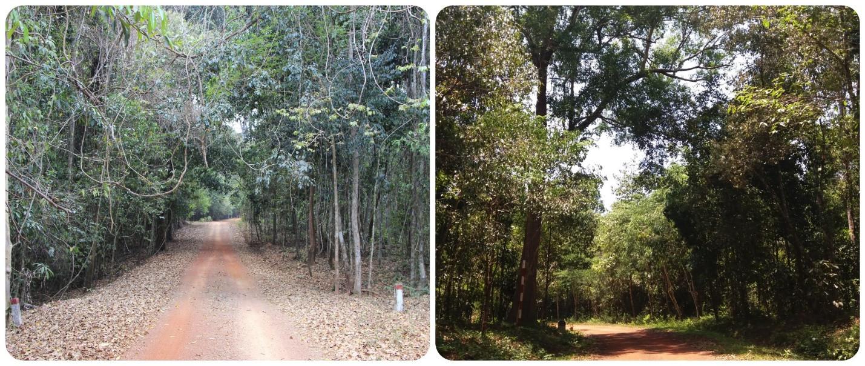 4 khu rừng sát bên Sài Gòn cho team thích ở ẩn, hết dịch đi ngay - 10