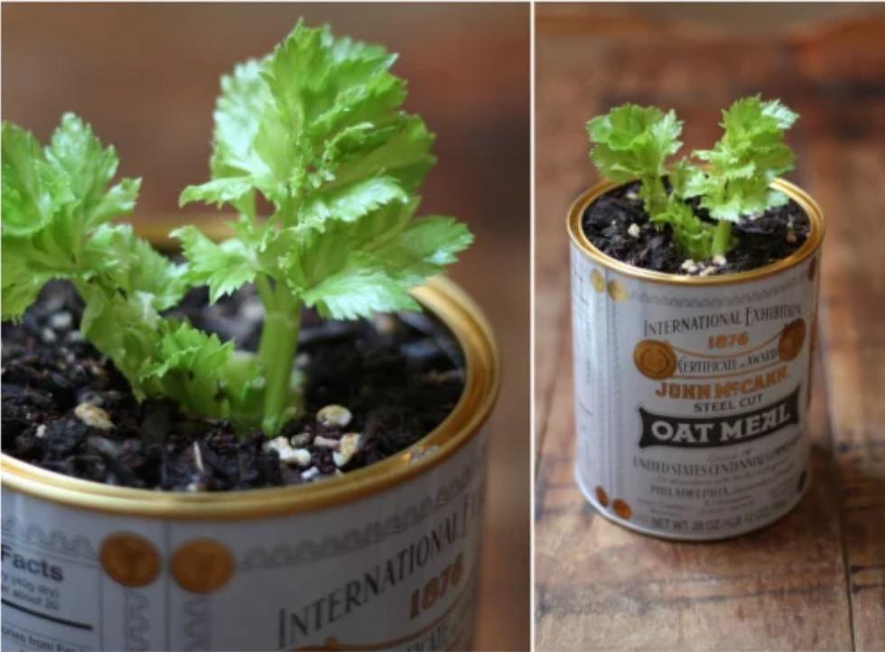 Mua rau gia vị về đừng vứt rễ đi, trồng theo cách này siêu đơn giản, ăn thoải mái, hết lại tự lên-1