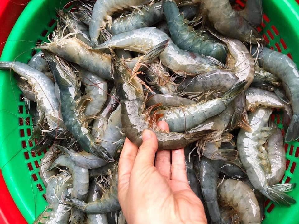 Nông dân Bà Rịa - Vũng Tàu đang ế hơn 500 tấn cá, tôm - 1