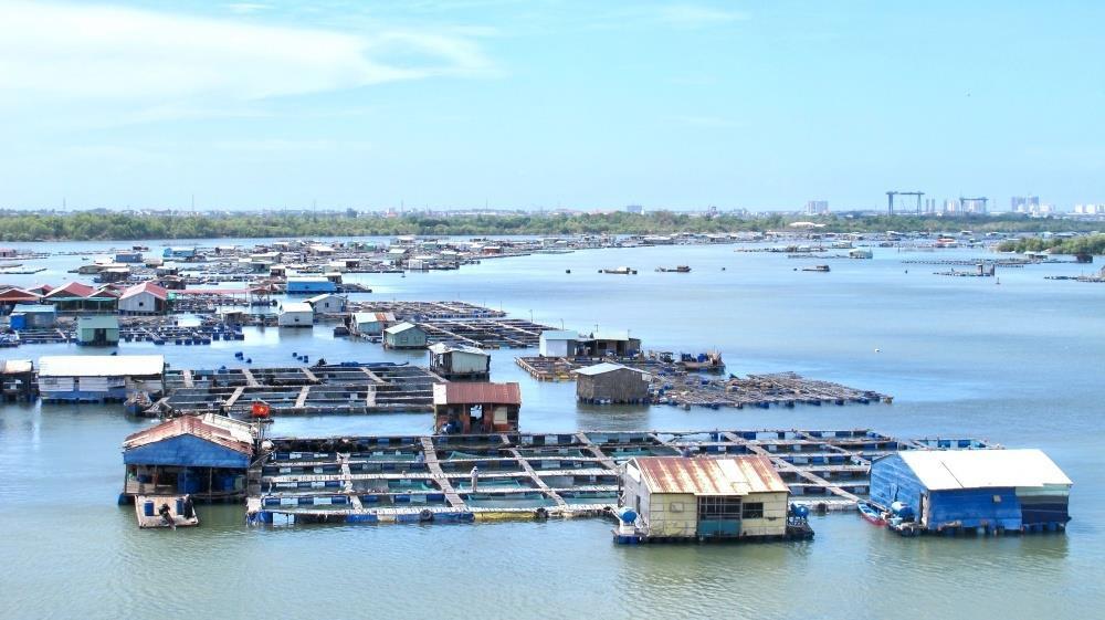 Nông dân Bà Rịa - Vũng Tàu đang ế hơn 500 tấn cá, tôm - 2