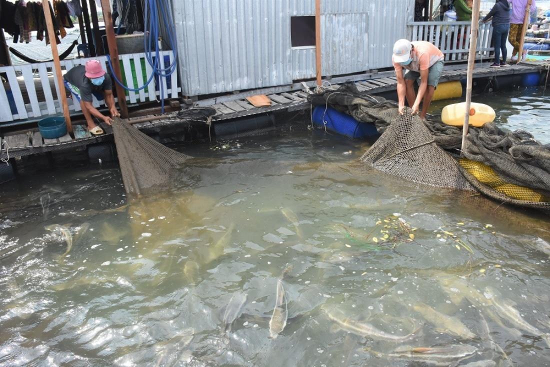 Nông dân Bà Rịa - Vũng Tàu đang ế hơn 500 tấn cá, tôm - 3