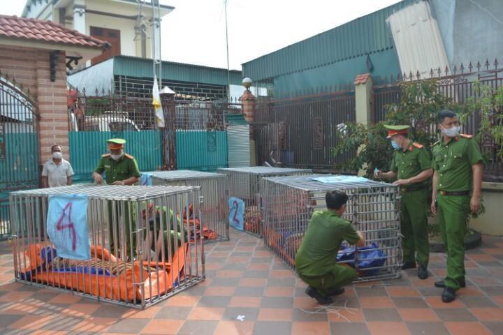 17 con hổ nuôi nhốt trái phép: Tạm giữ 2 chủ cơ sở để điều tra  - 1