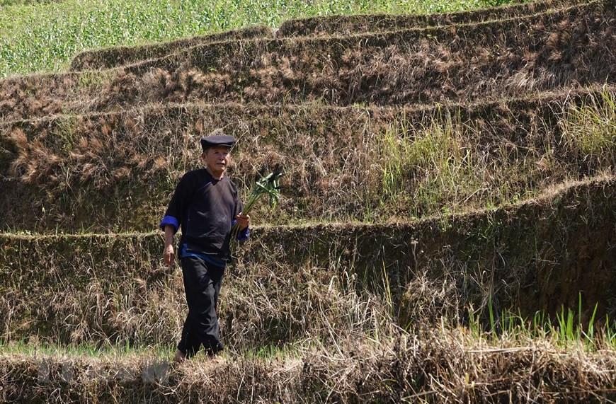 Yên Bái: Độc đáo lễ cúng ruộng của người Mông ở Mù Cang Chải - 6