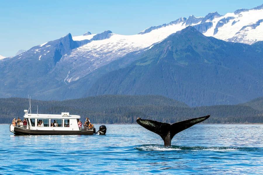 Vắng du khách, cá voi Alaska hạnh phúc hơn bao giờ hết - 4