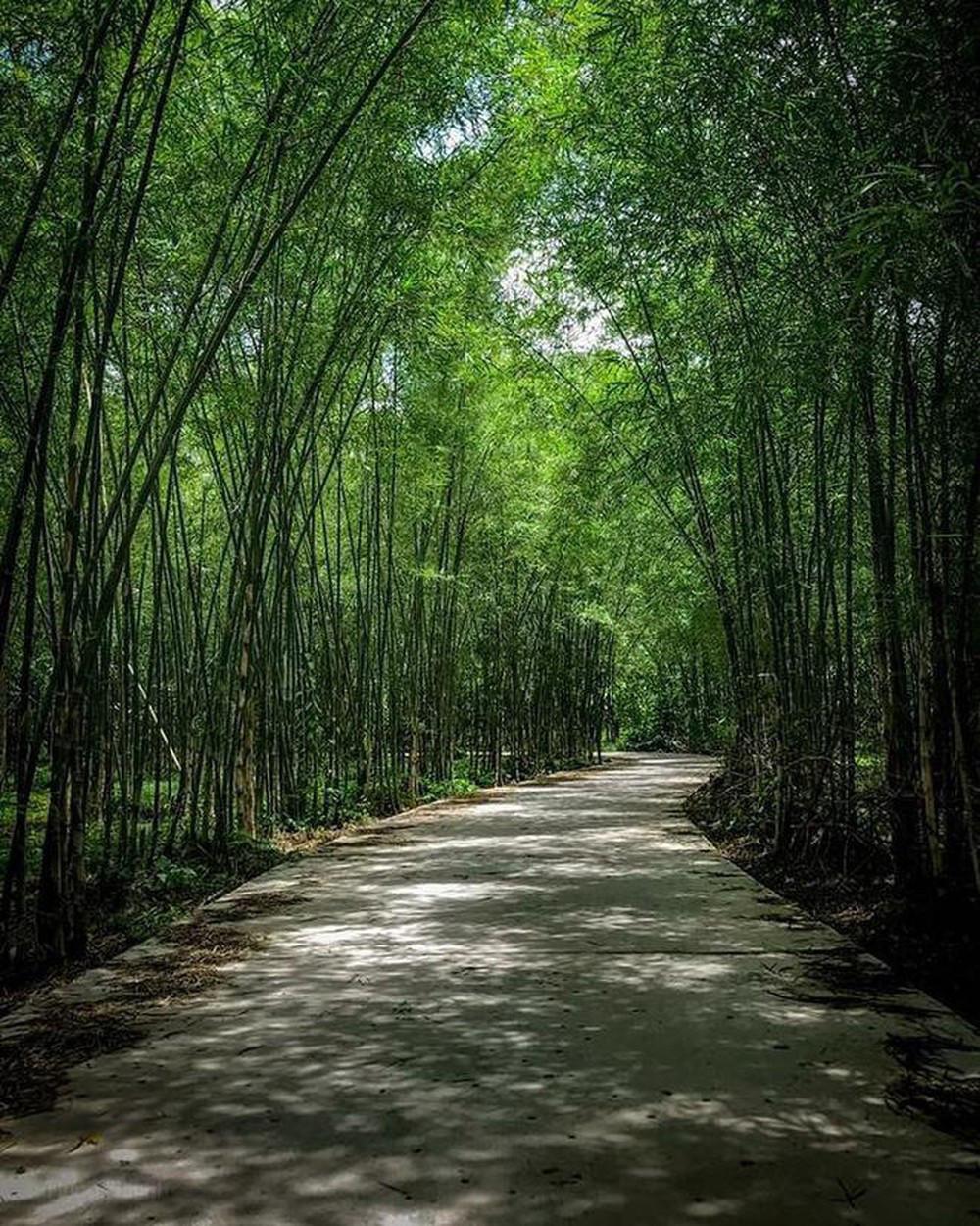 Mê mẩn ngắm nhìn rừng trúc đẹp như phim kiếm hiệp ở Mù Cang Chải - Ảnh 1.