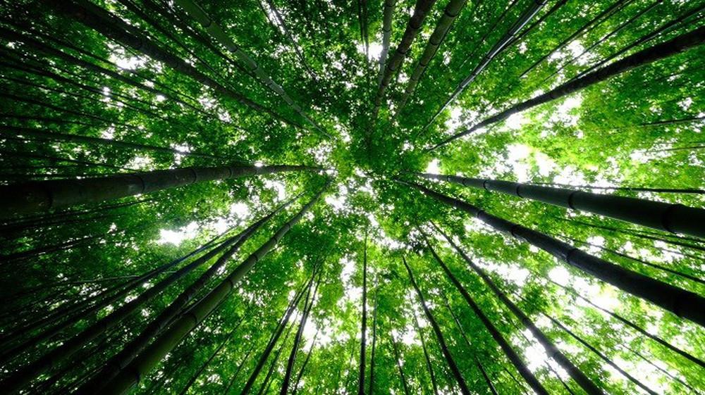 Mê mẩn ngắm nhìn rừng trúc đẹp như phim kiếm hiệp ở Mù Cang Chải - Ảnh 6.