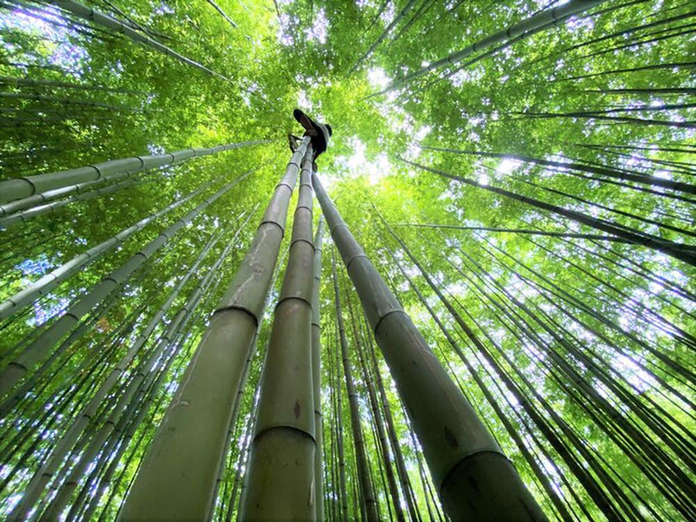 Mê mẩn ngắm nhìn rừng trúc đẹp như phim kiếm hiệp ở Mù Cang Chải - Ảnh 7.