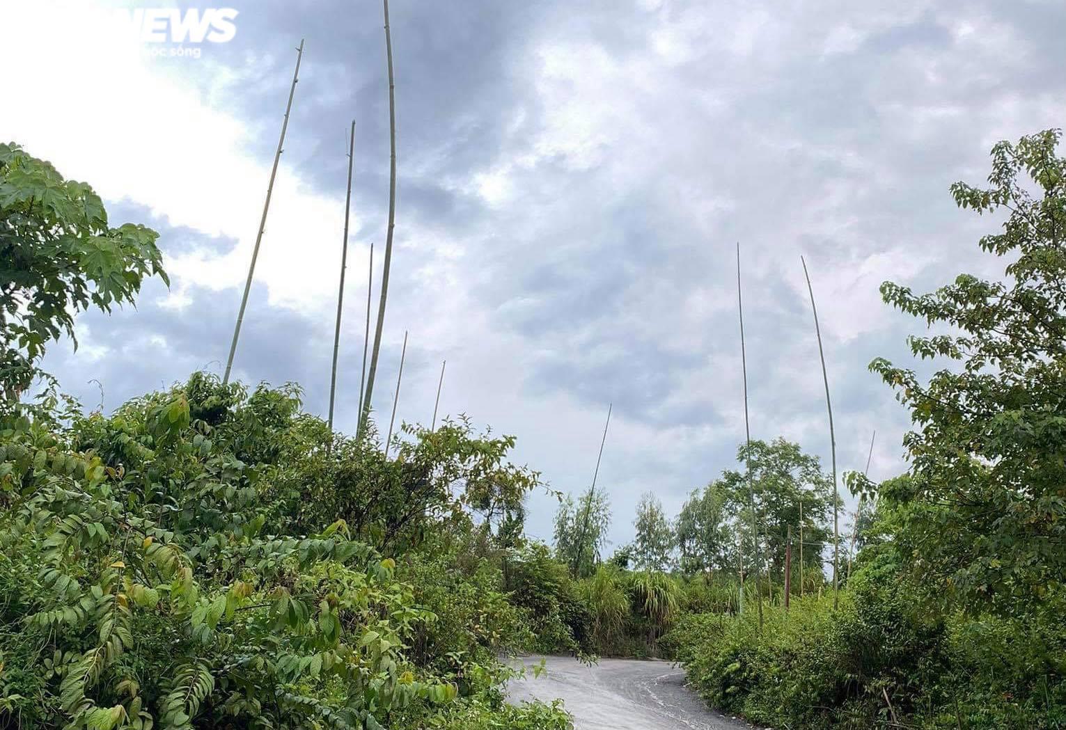 Ảnh: Hiện trường 'bắt vạ' 50 triệu/cây gỗ tạp, nhiều công an bị đánh nhập viện - 3